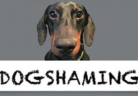 Dog Shaming 2014