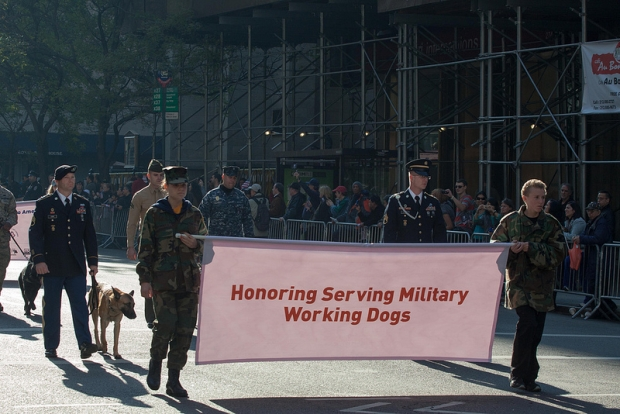 Veteran's Day – Honoring Our Service Members (Including the Dogs)