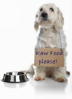 Dog with Raw Food Please Sign 236