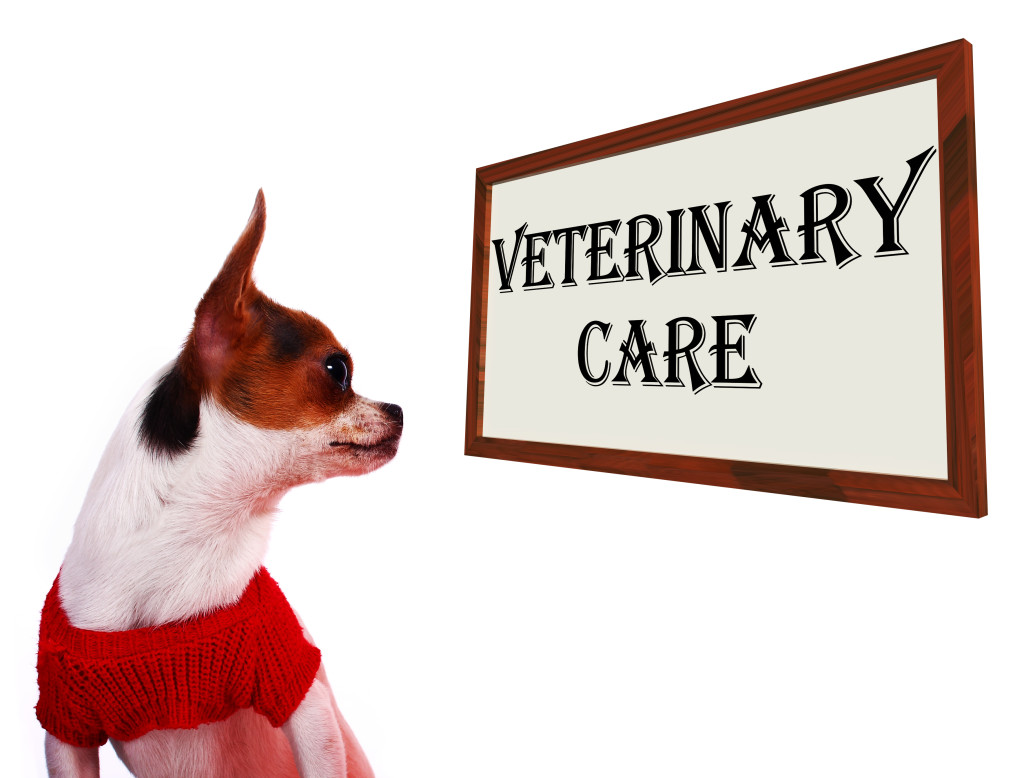 Veterinary Care Sign Showing Pet Clinic Or Hospital