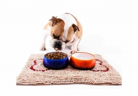Shocking Dog Food Research Study