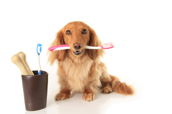 Why Brush Fido's Teeth?
