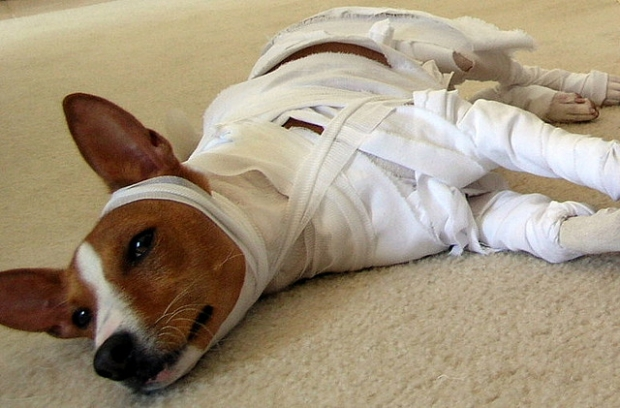 Apps for Dog & Cat Emergencies