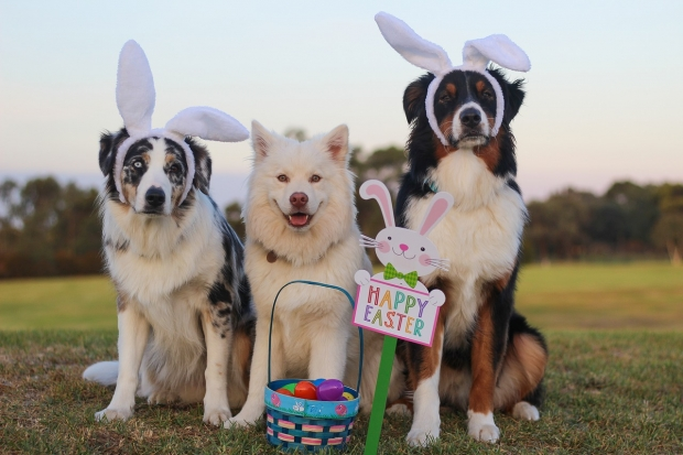 Natural Easter Dog Treats