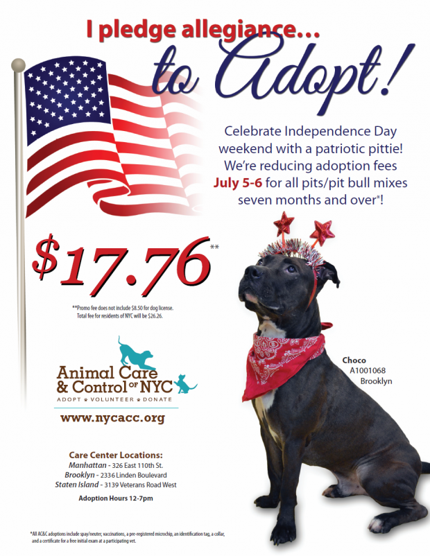 NYC 4th of July Weekend Adoption Event
