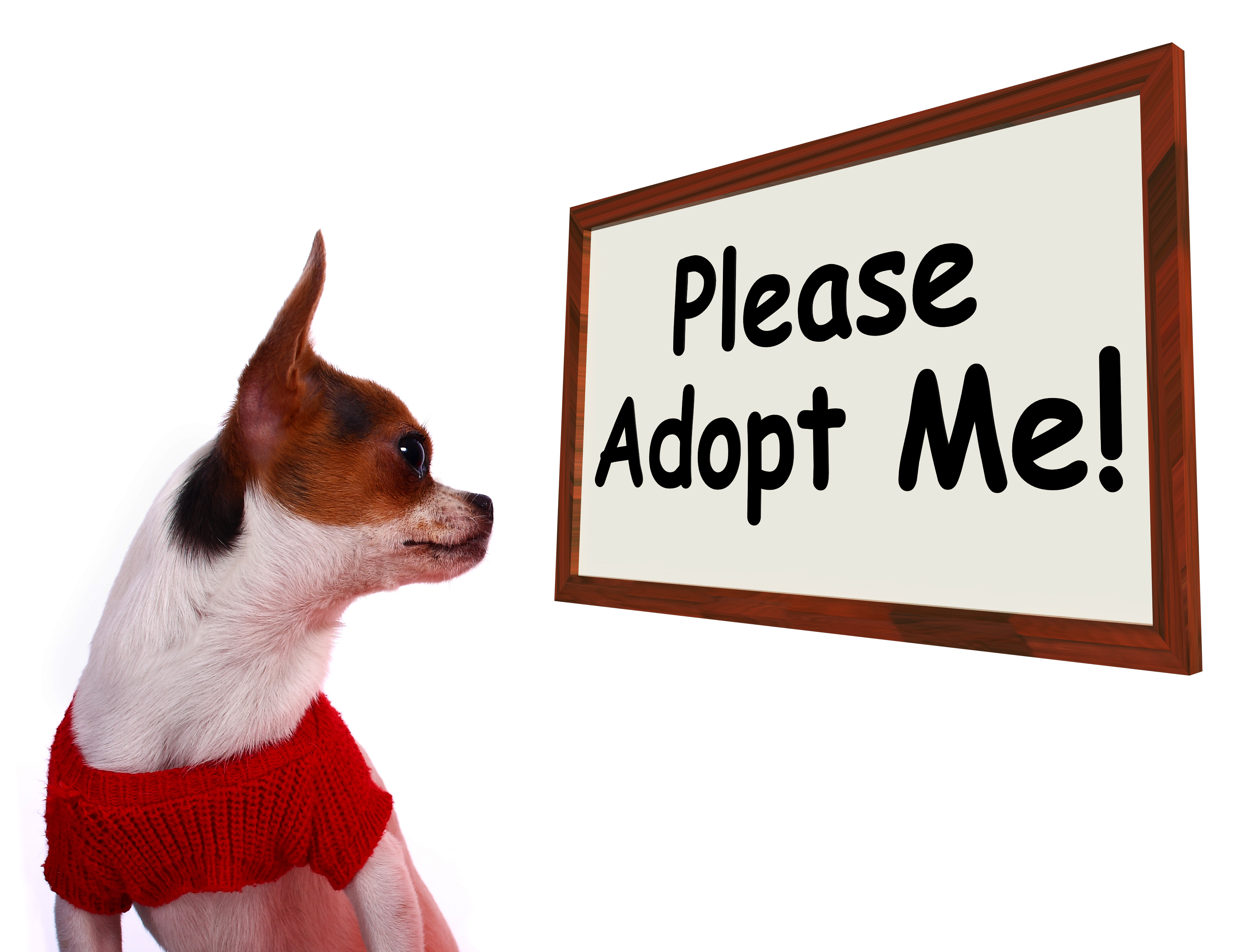 the truth about pet shops amp puppies essentially dogs