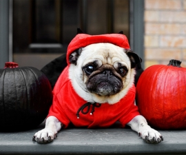 Halloween Dog Costumes 2017 – Better Late Than Never