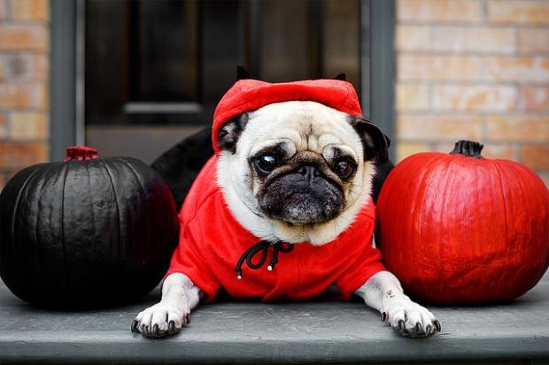 Halloween Dog Costumes 2015