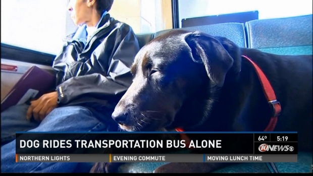 Dog Takes Public Transit to the Park