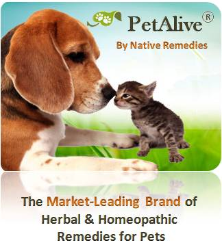 Natural Quick Remedies For Hot Spot On Dogs