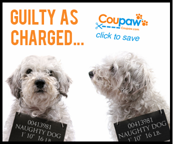 Coupaw Guilty Framed