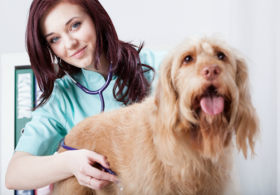 8 Questions to Evaluate Your Vet