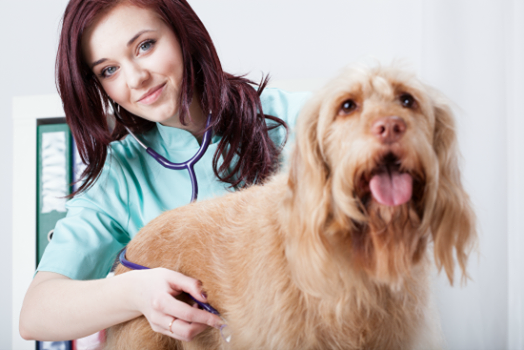 9 Questions to Evaluate Your Vet