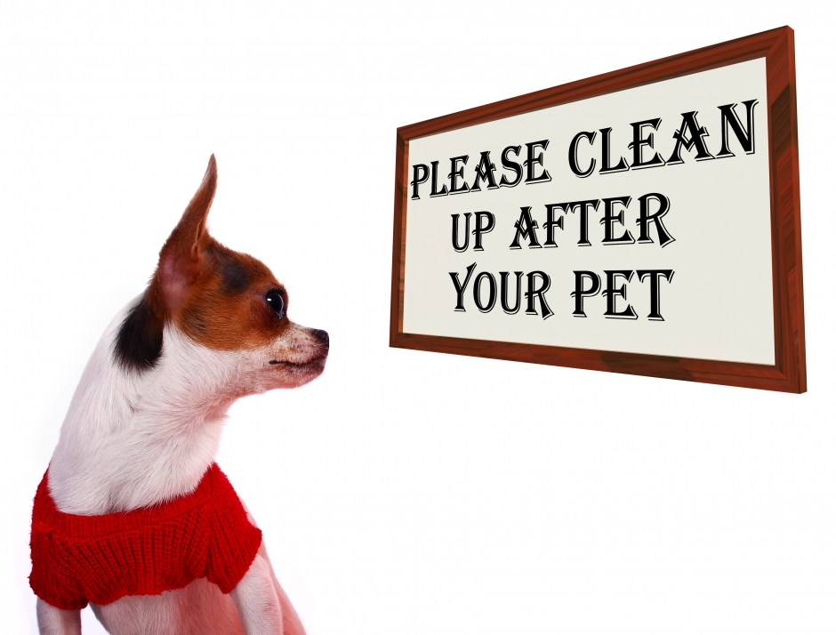 The BEST Pet Odor Removers