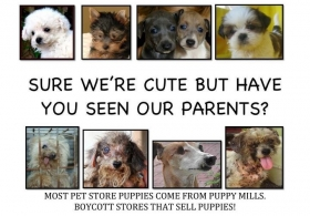 Puppy Mill Investigations