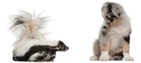 DIY De-Skunk Your Dog