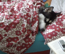 Dog Anxiety & Creating a Refuge