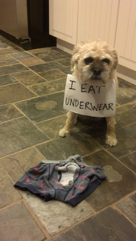 Dog Shaming | Essentially Dogs